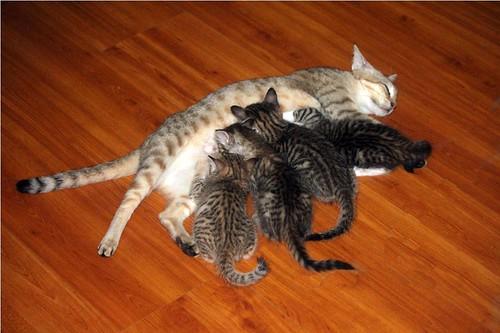 The  Motherhood, IMG_9762,sm by Flashback'r