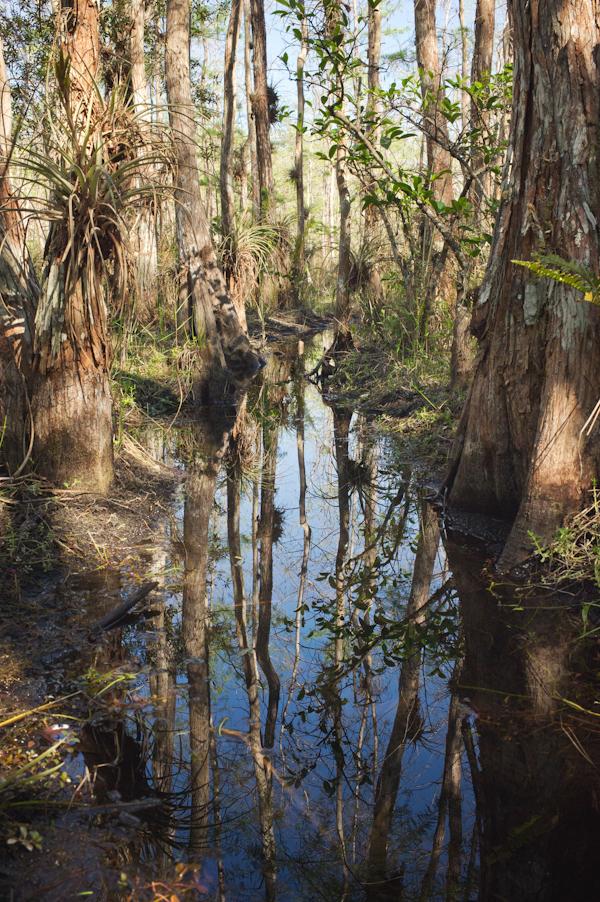 RYALE_Everglades-016