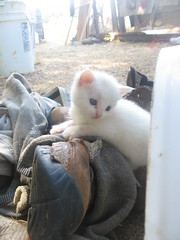 kitten on boot