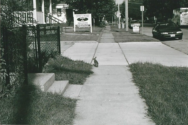 2nd street hare