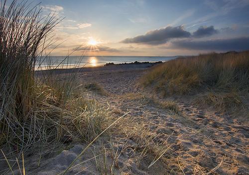 'Sunlit Marram' - Porth Tyn Tywyn, Anglesey