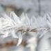 hoar-frost-detail-7