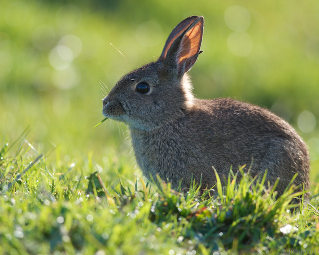 bunny (5)