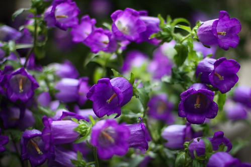 Purple by Kay Marti