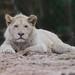 Maliba / Zoo Amnéville 2013- 003 ©mfld57