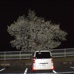 Tokushima, Spring & All