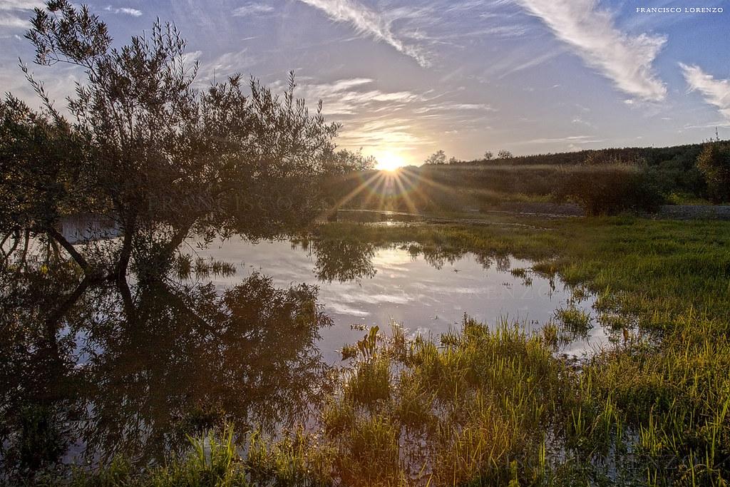 Primavera en el olivar