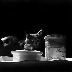 "Bonne Maman (the last of ""the empty jar""series) :-)"