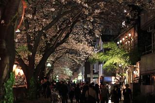 Sakura festival street / 桜祭り