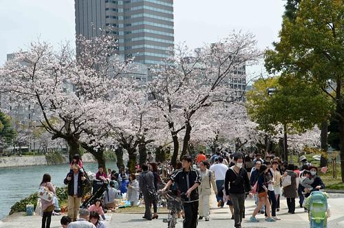 Hiroshima Sakura Hanami