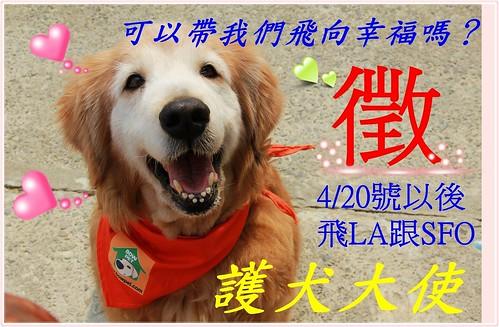 「長期徵護犬大使」長期徵飛往洛杉磯跟舊金山的護犬大使,謝謝大家幫忙~謝謝您~20130406