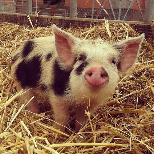 Jag avföljer de som behandlar döda djur som en trofé på Instagram. För mig är det ett litet barn - inte en saftig köttbit.