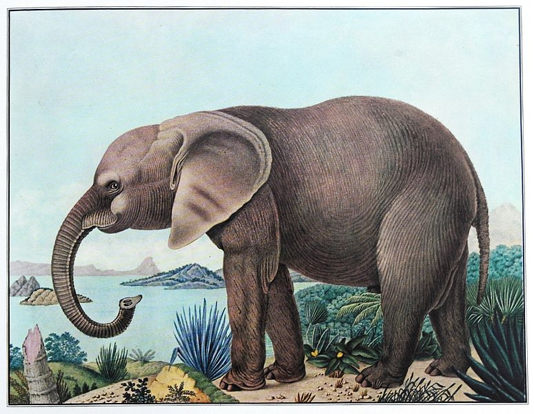 THE BESTIARIUM OF ALOYS ZÖTL (1831-1887) 774px-Der_afrikanische_Elefant