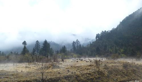 Yunnan13-Lijiang-Shangri La-Route (108)