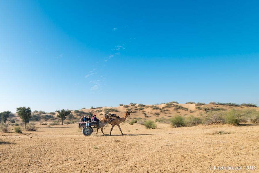 На верблюде по пустыне в Индии