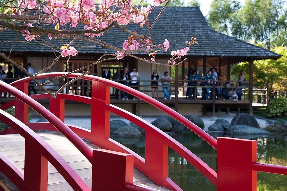 Jardin japonais#2 - Compans Caffarelli - Toulouse
