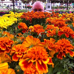 """""""ki-WI...ki-WI...measuring the marigolds..."""" @kiwi1959"""