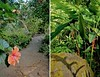 Enter the public portion of Waimea Valley Reserve's nearly 2000 acres and discover a setting filled with tropical foliage and wildlife...including some endangered strains and species