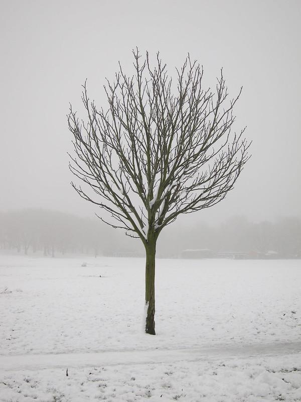Peckham Rye: tree
