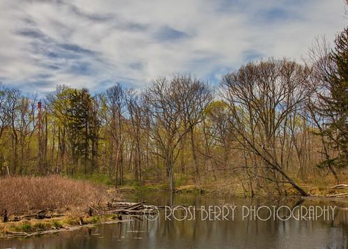 Fuch's Pond