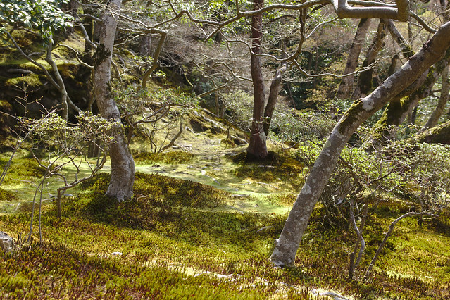 0668 - Ginkaku-ji el Pabellon Plateado