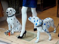 animal, pattern, dog, pet, mammal, dalmatian, design, blue,