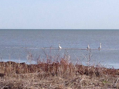 Birds on Lake Erie
