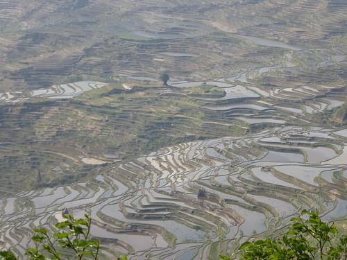 Yunnan13-Yuanyang 5 (4)