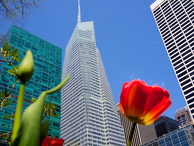 Buildings, planes and flowers in the heart of the city