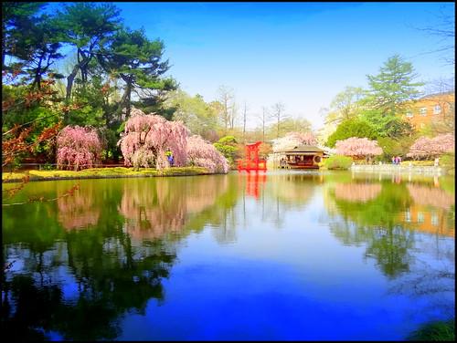 newyork brooklyn image brooklynbotanicgarden dmitriyfomenko spring62013