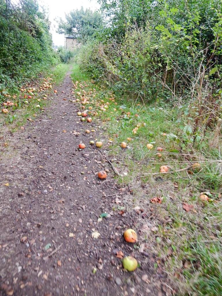 Fallen Apples St Margarets Circular