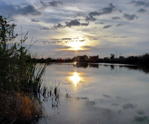 ranch morning trees arizona sky plants lake color reflection tree nature water ecology beautiful weather silhouette clouds sunrise landscape dawn early twilight pond colorful day alone quiet peace view horizon reflect gilbert serene bushes preserve placid daybreak riparian morn
