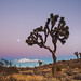 Joshua Tree National Park by sgoralnick