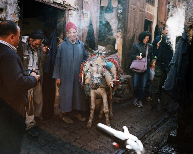 Fes Street Donkey