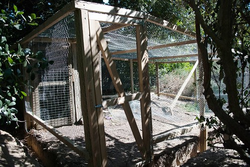 Chook pen build