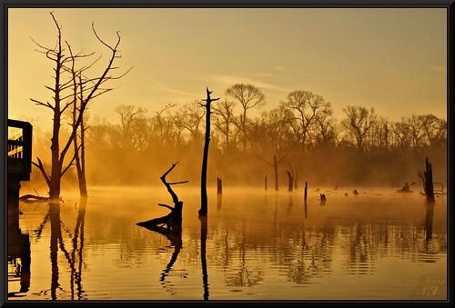 park trees mist nature water sunrise reflections golden fisherman kayak texas bayou boardwalk pasadena canoeing paddling a57 bayareapark armandbayou wanam3 sonya57