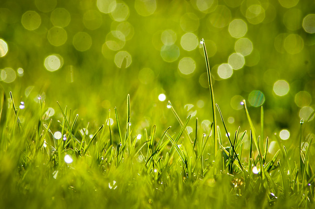 Lawn, Dew, Grass, Green, Bokeh, Sparkle, Landscape