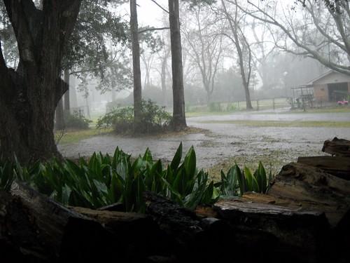 Mo' rain by Janis Gore