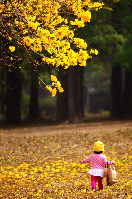 小小姑娘 Little Little Girl
