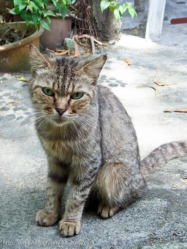 cat R0021827 copy