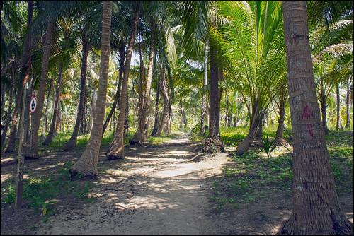 Koh Rang Yai - Island Interior