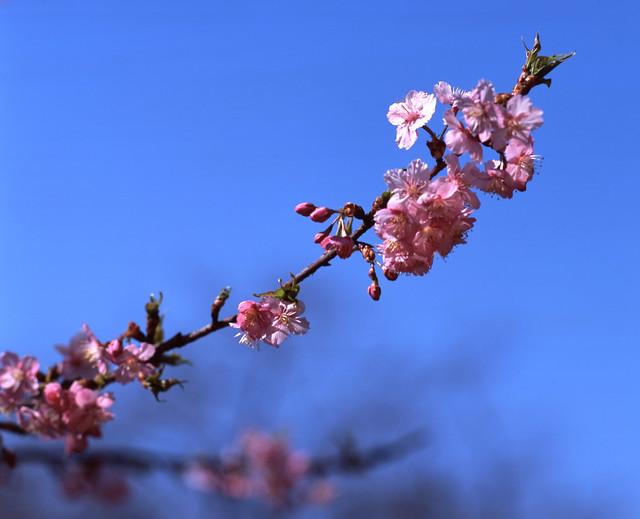 早春のほころび