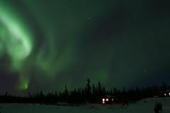 Northern Light @ Beck's Kennels, Yellowknife