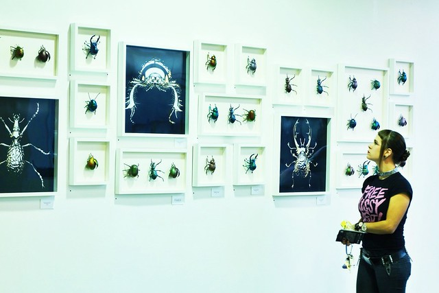 ARTHROPOD BRAIN SHOW