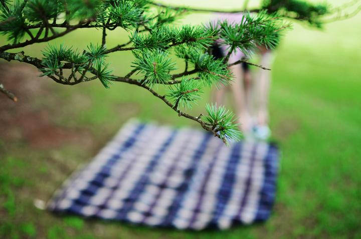 5 picnic blanket