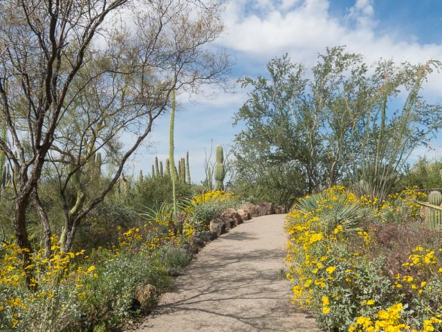 Desert Garden Path