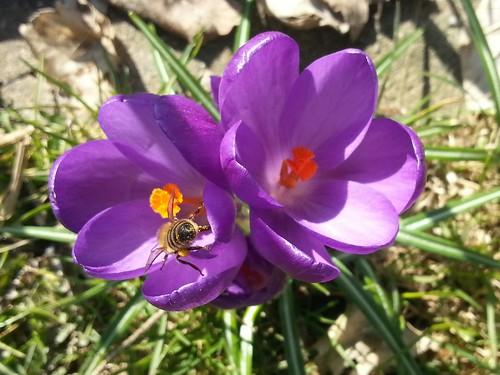 Frühling by Dalmatiner vom Hossenhaus