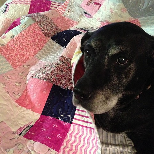 94:365 Bella approves of Megan's new quilt.