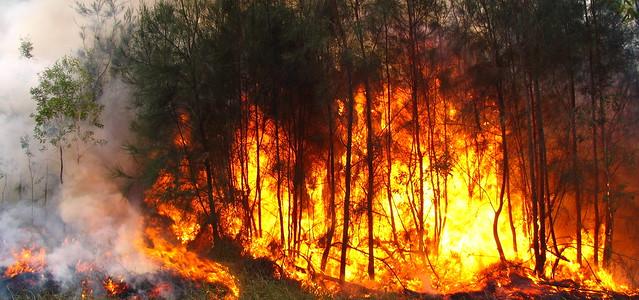 bushfire (20)