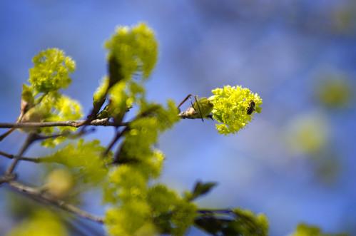new flowers macro tree leaves spring nikon bokeh bugs bee april jeresy d7000